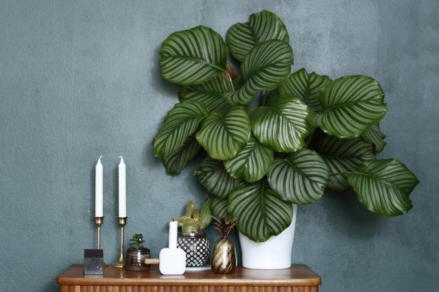 How houseplants became essential to the great indoors