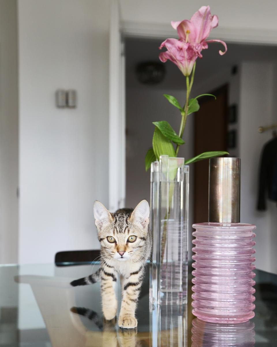 Home sweet home italian style scarabellis cat tilde strides past a pink onda vase by sergio asti for arnolfo di cambio 1968 reviewsmspy