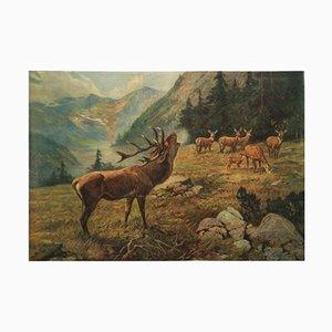 German Vintage School Poster Deer
