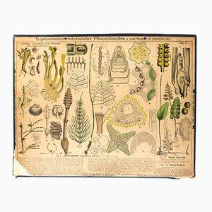 Puzzlegrass Wall Chart by Zippel & Bollmann, 1879