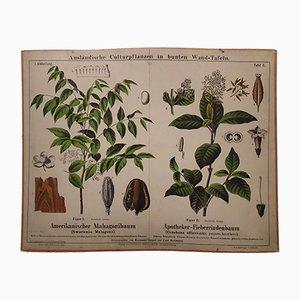 Antikes Mahagoni & Chinarindenbaum Wandplakat, 1870er