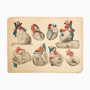 Heart School Teaching Chart by M. J. Weber, 1830