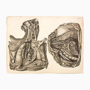 Der Menschliche Körper Anatomie Lehrtafel von M. J. Weber für Arnz & Company, 1830