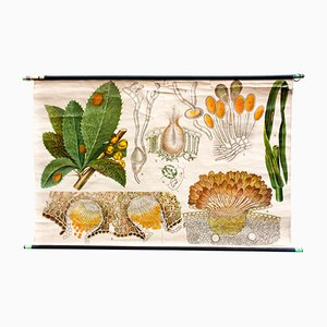 Botanical Chart by Otto Schmeil, 1899