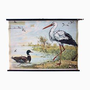 Stork Natural Scene Lithograph by J. F. Schreiber, 1893