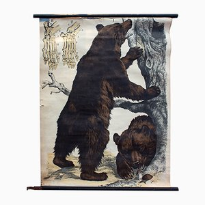 Brown Bear Lithograph by J. F. Schreiber, 1893