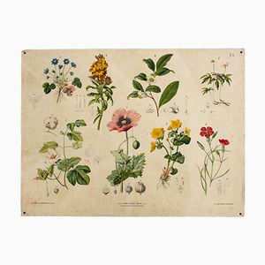 Antique Wall Chart Depicting Flowers by Hartinger and Beck, 1879
