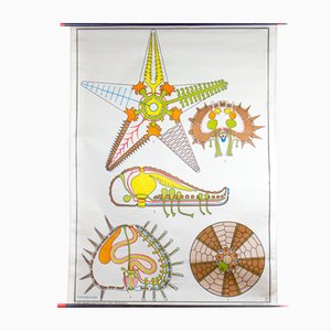 Starfish Wall Chart by Dr. Lip for Gerhard Gambke, 1969