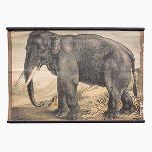 Elephant Educational Chart by C. C. Meinhold & Söhne, 1891