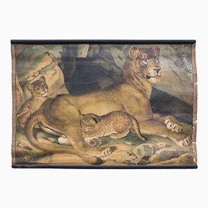 Lion Educational Chart, 1891