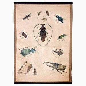 Bugs Educational Chart, 1914