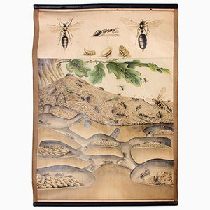 Ant Colony Educational Chart, 1914