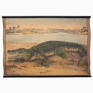 Crocodile Educational Chart by C. C. Meinhold & Söhne, 1891