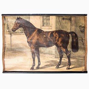 Bohemian Horse Educational Chart by Karl Jansky, 1897