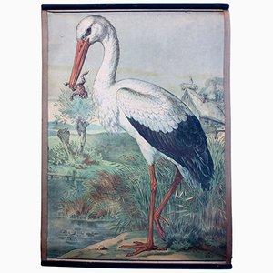 Bohemian Stork Educational Chart by Karl Jansky, 1897