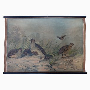Lithograph Educational Chart of a Quail & Partridge by Karl Jansky, 1897