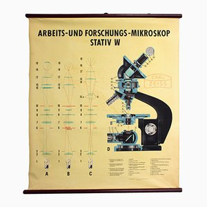 Wall Chart of the Carl Zeiss Microscope, 1949