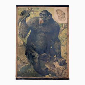Póster educativo vintage con gorila