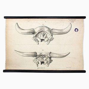 Stock Farming Wall Chart by Hermann von Nathusius, 1858