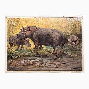 Nilpferd Wandplakat von A. Weber für C. C. Meinhold & Söhne, 1891