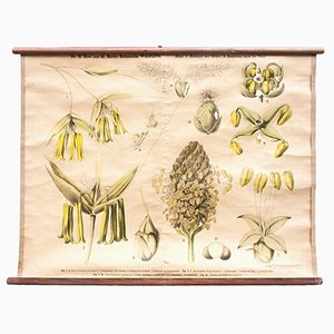 Educational Chart of the Biology of a Flower by Ross & Morin for Eugen Ulmer, 1900s