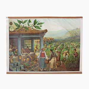 Wall Chart of Tea Production, 1929