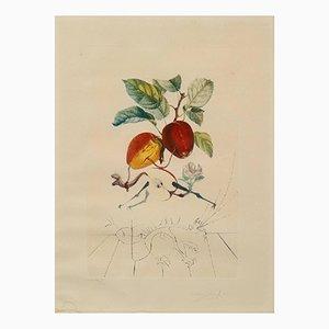 Photolithographie FlorDali / Les Fruits par Salvador Dali, 1968