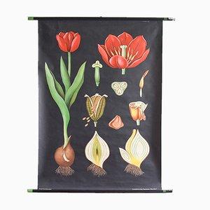 Vintage Tulip Schulwandkarte von Jung, Koch & Quentell für Hagemann, 1963