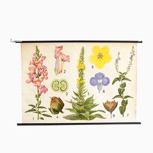 Botanische Wandkarte von Jung, Koch und Quentell für Hagemann