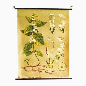 Vintage Botanik Poster von Jung, Koch & Quentell für Hagemann