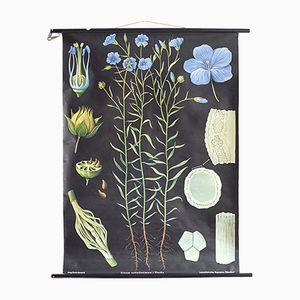 Poster vintage botanico di Jung, Koch, & Quentell per Hagemann