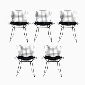 Stühle von Harry Bertoia für Knoll International, 1950er, 5er Set