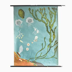 Vintage Ocean Botanical Poster by Jung, Koch, & Quentell for Hagemann