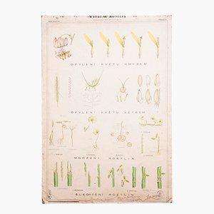 Vintage Pflanzen Lehrtafel, 1970er