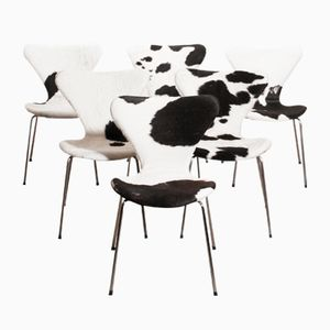 3107 Dining Chairs by Arne Jacobsen for Fritz Hansen, 1950s, Set of 6