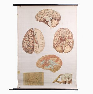 Vintage German Brain Poster