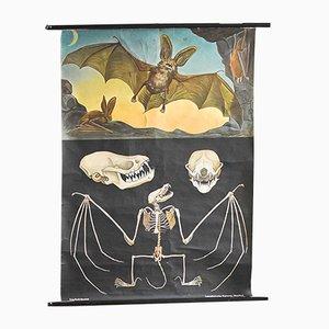 Poster vintage raffigurante un pipistrello di Jung, Koch, & Quentell per Hagemann