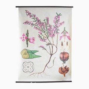 Botanisches Vintage Plakat von Jung, Koch & Quentell für Hagemann