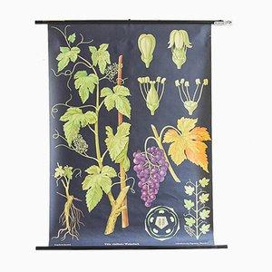 Affiche Botanique Vintage par Jung, Koch, & Quentell pour Hagemann