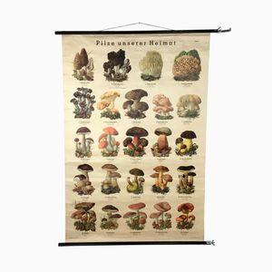 Poster educativo vintage raffigurante dei funghi di Verlag Röhr, Germania, anni '60