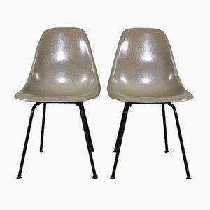 Sedie DSX di Charles & Ray Eames per Herman Miller, anni '60, set di 2