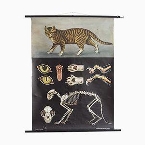 Poster vintage raffigurante un gatto di Jung, Koch, & Quentell per Hagemann