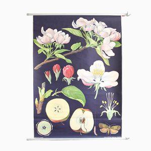 Botanisches Vintage Plakat von Jung, Koch, & Quentell für Hagemann