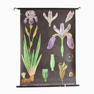Affiche Botanique Vintage par Jung, Koch & Quentell pour Hagemann