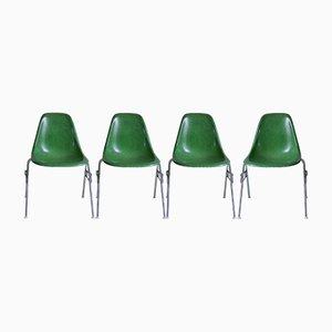 Chaises DSS en Fibre de Verre par Charles & Ray Eames pour Herman Miller, Set de 4