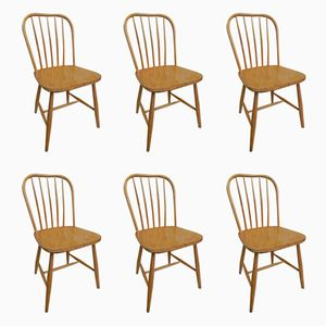Mid-Century Model S209 Dining Room Chairs from Pastoe, Set of 6