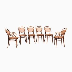 Vintage Bugholz Stühle, 6er Set
