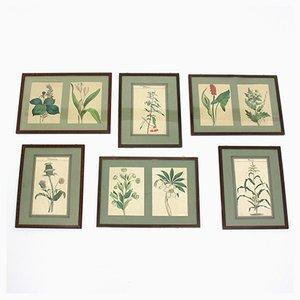 Stampe botaniche con cornice, anni '60, set di 6