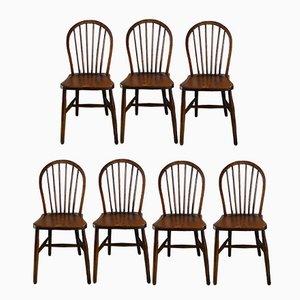 Vintage Stühle mit Fächerförmiger Rückenlehne von Lucian Ercolani für Ercol, 7er Set
