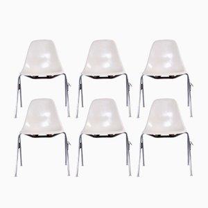 Mid-Century DSS Fiberglas Stühle von Charles & Ray Eames für Herman Miller, 6er Set